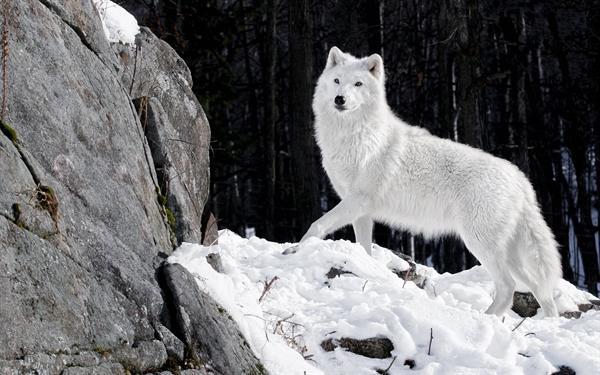 Fanfic / Fanfiction Uma historia de lobos e magia que eu chamo de moon wolves - Capítulo 4 - A pasagem secreta