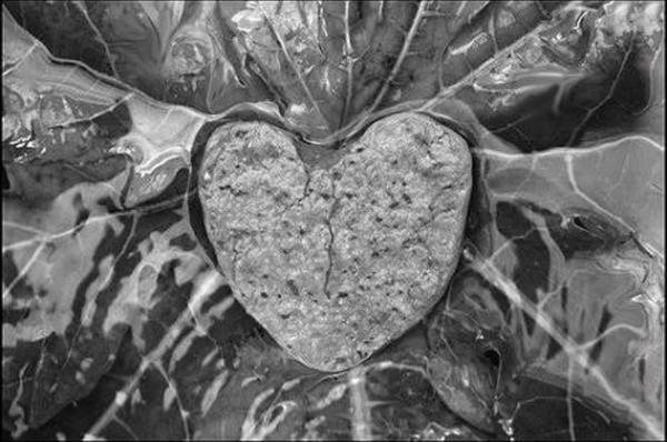 Fanfic / Fanfiction My heart is of stone - Capítulo 5 - Primeira beijo, talvez..