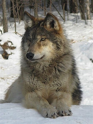 Fanfic / Fanfiction A existencia de uma loba monus - Capítulo 27 - ...