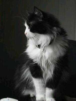 Fanfic / Fanfiction A mansão - Camren - Capítulo 34 - O gato e a suposta saida!