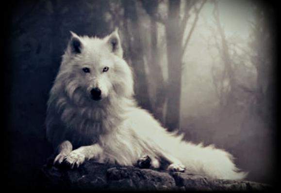 Fanfic / Fanfiction O Lobo Mau e a Menina Da Capa Vermelha - Capítulo 2 - Two