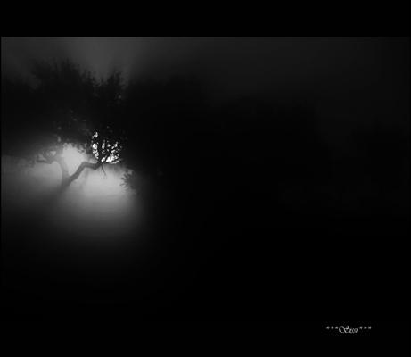 Fanfic / Fanfiction A Menina Do Vestido Azul - Capítulo 15 - Luz na escuridão