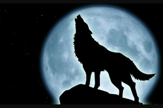 Fanfic / Fanfiction Amor de lobo... - Imagine Chanyeol - Capítulo 3 - O lobo de olhos azuis