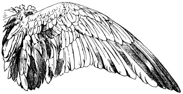 Fanfic / Fanfiction Mitw- Anjos e Demônios- O começo do caos - Capítulo 35 - Reaprender a voar