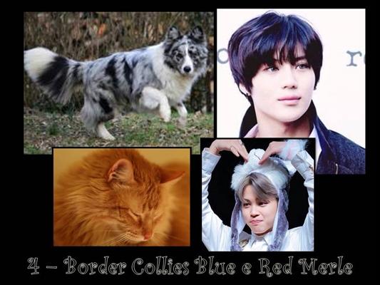 Fanfic / Fanfiction Coisas de Híbridos - Capítulo 4 - Border Collies Blue e Red Merle