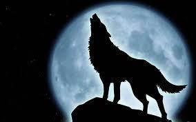 Fanfic / Fanfiction Entre lobos e vampiros - Capítulo 6 - Um Lugar especial...