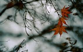 Fanfic / Fanfiction Folhas De Outono - Namjin ABO - Capítulo 4 - Amarelo