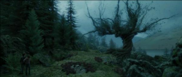 Fanfic / Fanfiction Harry Potter ea Profecia Perdida - Capítulo 7 - A Batalha no Salgueiro Lutador