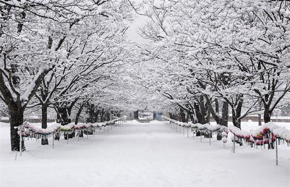 Fanfic / Fanfiction Imagine Kim Taehyung - Capítulo 7 - Snow! Volta aqui!