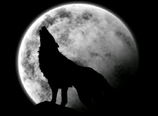 Fanfic / Fanfiction Lobo Adolescente - Capítulo 2 - Ataque De Animal
