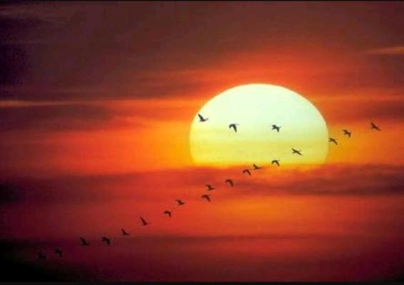 Fanfic / Fanfiction O que me vem à cabeça - Capítulo 7 - Obrigado Sol
