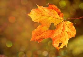 Fanfic / Fanfiction Yoonkook Fotografias - Capítulo 38 - Folhas de outono