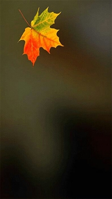 Fanfic / Fanfiction A menina de cachecol laranja. - Capítulo 5 - Outono - Ano 1