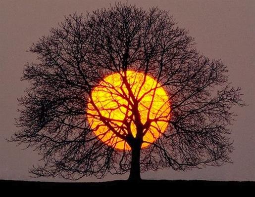 Fanfic / Fanfiction Amor imprevisível - Capítulo 32 - A árvore do pôr do sol