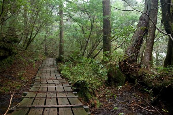 Fanfic / Fanfiction Sacrifice - Capítulo 19 - Passeio na floresta.