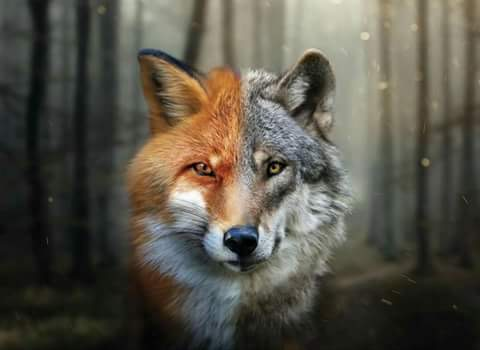 Fanfic / Fanfiction Fox Elementary - Capítulo 1 - Prólogo
