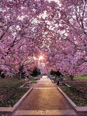 Fanfic / Fanfiction Meu pequeno ómega - Capítulo 7 - Flora de Cerejeira