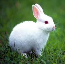 Fanfic / Fanfiction Minha pequena bunny girl - Capítulo 1 - Quem é vc