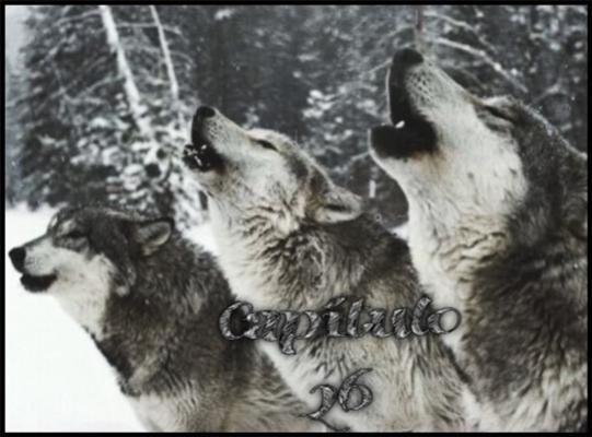 Fanfic / Fanfiction Alma de Lobo - Capítulo 26 - Capítulo XXVI