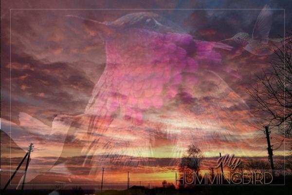 Fanfic / Fanfiction My Hummingbird - Capítulo 21 - Sunrise