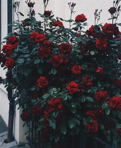 Fanfic / Fanfiction Rosas Negras - Capítulo 13 - Saudades