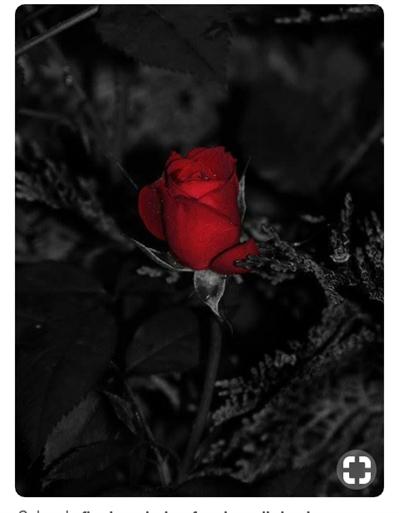 Fanfic / Fanfiction A fuga da rosa negra . - Capítulo 1 - A fuga da rosa negra