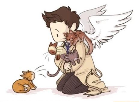 Fanfic / Fanfiction Na moral? Tu é um anjo. - Cellan. - Capítulo 1 - Únicos, e amantes de gatos