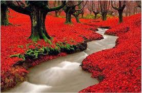 Fanfic / Fanfiction A irmã de naruto e sasuke - Capítulo 8 - A floresta vermelha
