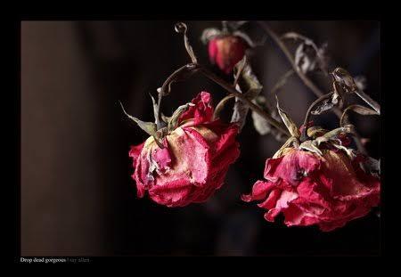 Fanfic / Fanfiction Diga-me; - Capítulo 1 - Rosa murcha; capítulo único
