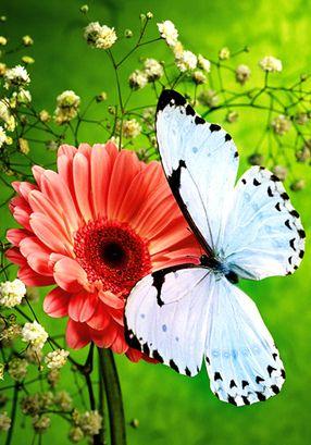 Fanfic / Fanfiction Im trap - Capítulo 1 - Capítulo I--- Butterfly