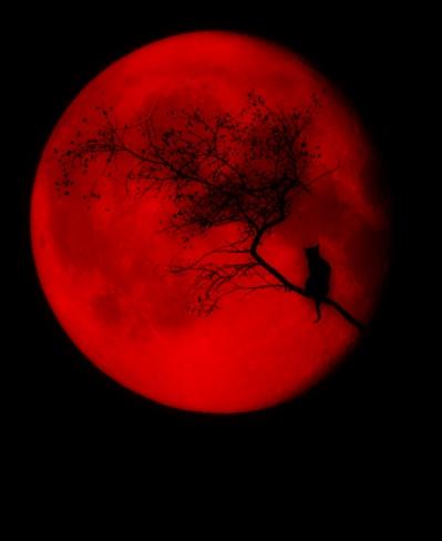 Fanfic / Fanfiction Lua de Sangue - Capítulo 2 - Pesquisas