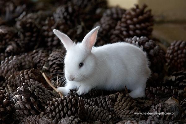 Fanfic / Fanfiction My Little Rabbit - Imagine Jungkook (Híbrido) - Capítulo 2 - Capítulo 02