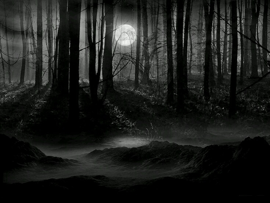 Fanfic / Fanfiction Procura-se um príncipe - Capítulo 6 - Na floresta...