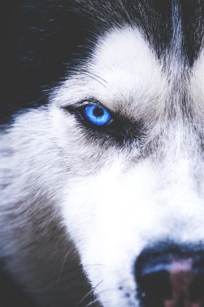 Fanfic / Fanfiction The flower of the wolves - Capítulo 1 - Está tudo tão estranho