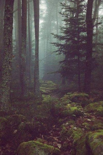 Fanfic / Fanfiction The flower of the wolves - Capítulo 4 - Floresta