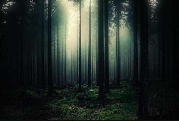 Fanfic / Fanfiction The Girl - Capítulo 1 - A floresta