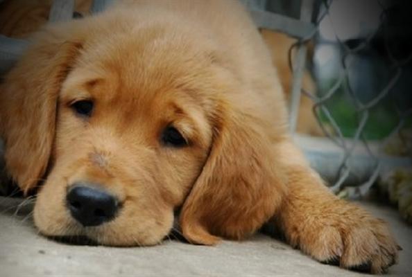 Fanfic / Fanfiction My dog- fanfiction BTS - Capítulo 1 - Uma cachorrinha