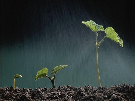 Fanfic / Fanfiction As fases mais complexas de uma vida - Capítulo 1 - A Fase do Crescimento.