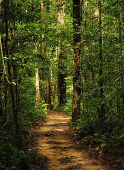 Fanfic / Fanfiction Bela - A plebéia (isulio) - Capítulo 3 - A garota na floresta