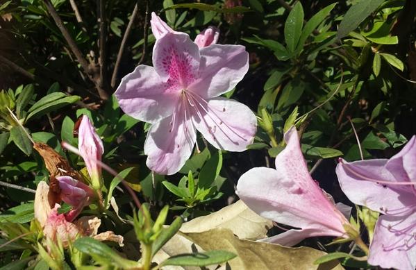 Fanfic / Fanfiction Poemas - Capítulo 5 - Linda natureza