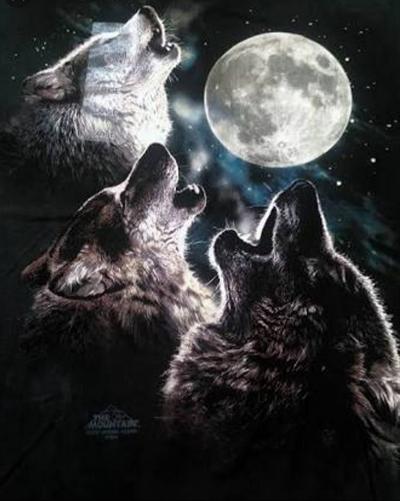 Fanfic / Fanfiction Lone Wolf ( Taekook-Vkook ) -(NamJin). - Capítulo 6 - Cap 06 - Amigos novos.