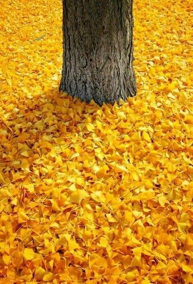 Fanfic / Fanfiction Pelo menos amarelo. (Taeyoonseok,Jikook e Namjin) - Capítulo 5 - A linda árvore