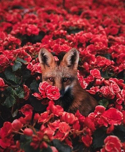 Fanfic / Fanfiction Poemas - Capítulo 1 - My foxy