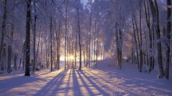 Fanfic / Fanfiction Sasusaku uma batalha pela Noruega - Capítulo 15 - Floresta de neve