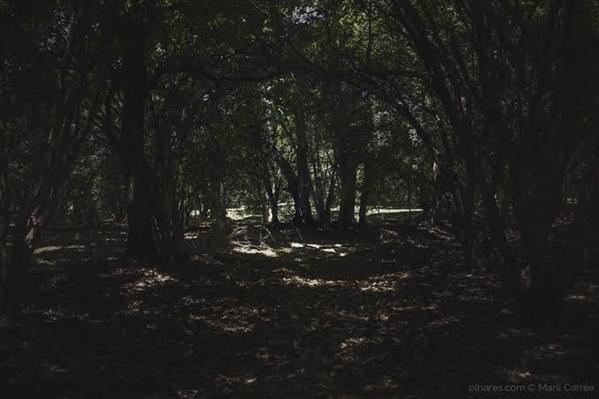Fanfic / Fanfiction Histórias que o Bairro do Limoeiro conta - Capítulo 49 - Fuga e surpresas