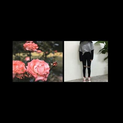 Fanfic / Fanfiction Sorriso Quadrado - Capítulo 1 - Rosa linda!