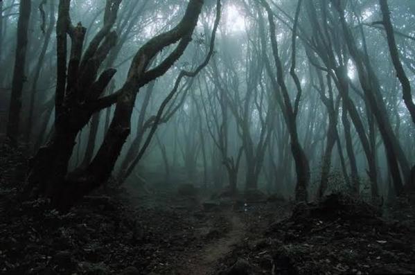 Fanfic / Fanfiction Blood,Love and Jealous (Jeff x Slender) - Capítulo 1 - Floresta Maldita
