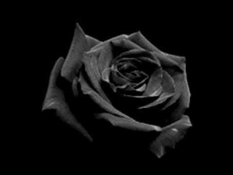 Fanfic / Fanfiction Rosa vermelha - Capítulo 2 - A vida continua.