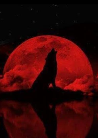 Fanfic / Fanfiction A lenda das alcateias - Capítulo 14 - Lua de sangue