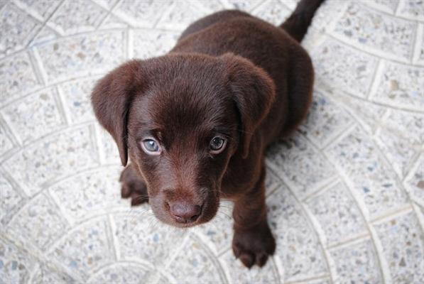 Fanfic / Fanfiction Baby - Noart - Capítulo 19 - Que cachorro?